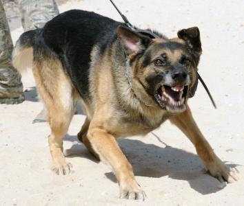 Resultado de imagem para security dog